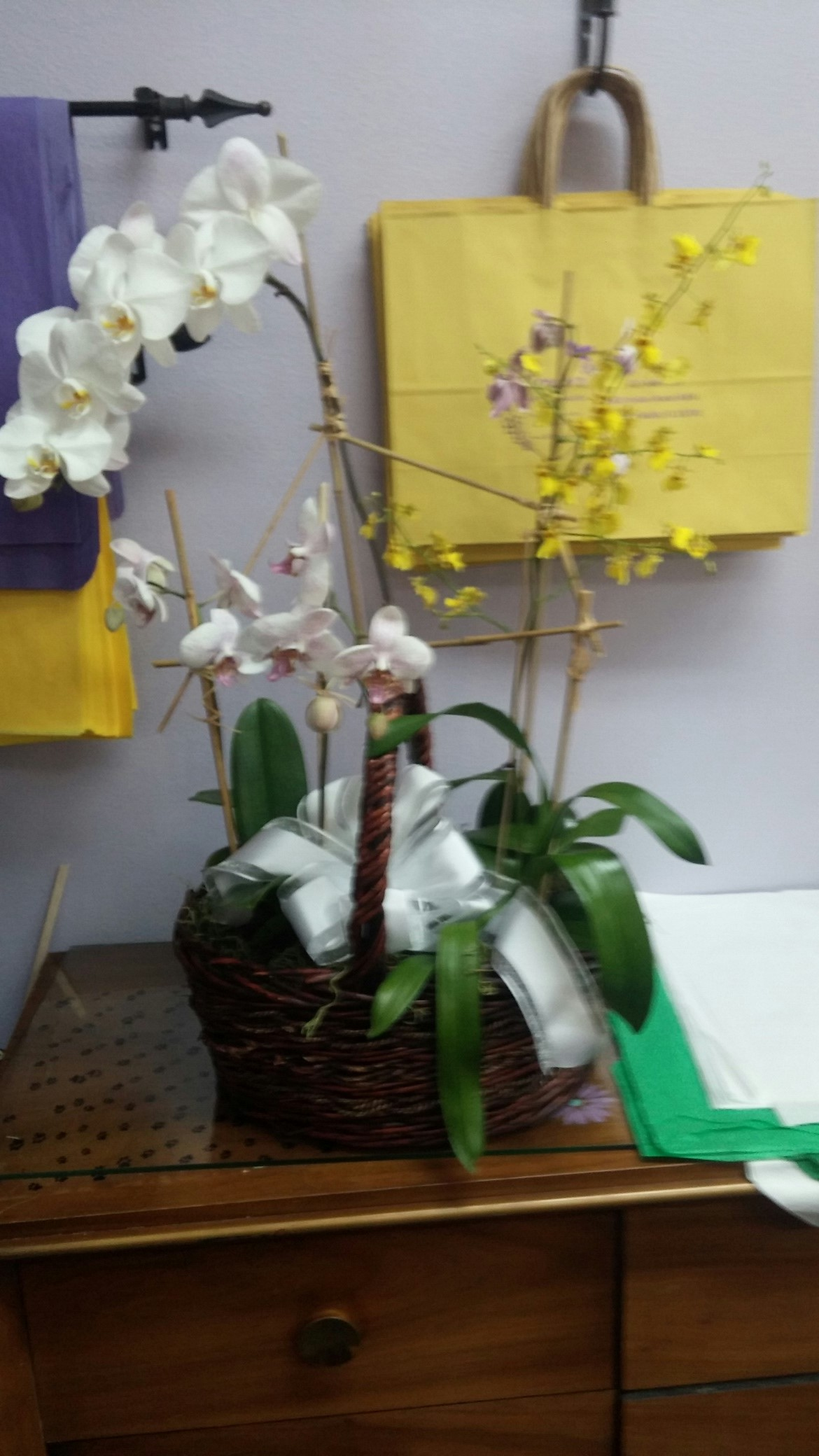 Orchid Plant Dish Garden