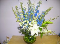 Delphiniums in Bloom