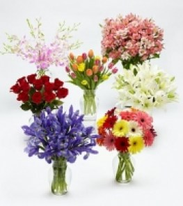 flowers_of_the_m_4d2ba6e8adbeb_200x200